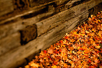 Brilliant red, orange, yellow and brown autumn leaves cover the ground beside a wooden retaining wall in Charlotte, NC. A summer with frequent rains, followed by fall with hot afternoons and cool nights gave leaf peepers a pallet of colorful fall foliage to enjoy in 2009.