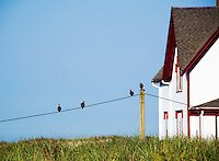 Birds and keepers house detail, Stage Harbor Lighthouse, Chatham, Cape Cod, Massachusetts, USA