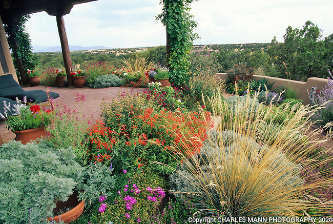 A colorful Xeriscape  garden design  by Susan Blake of Santa Fe, New Mexico, features many beautiful drought tolerant species, including Zauschneria, Stachys, Centranthus, lavender, Yarrow, Iris, Russian Sage, Gaillardia,  and many ornamental grasses including Miscanthus.