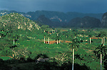 Amérique, Cuba, province de Pinar del Rio, vallée de Vinales, site classé par l'Unesco (paysage culturel)//America, Cuba, Pinar del Rio province, Vinales valley, classified by the Unesco (cultural landscape)