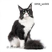 Xavier, ANIMALS, REALISTISCHE TIERE, ANIMALES REALISTICOS, FONDLESS, photos+++++,SPCHWS640,#A#