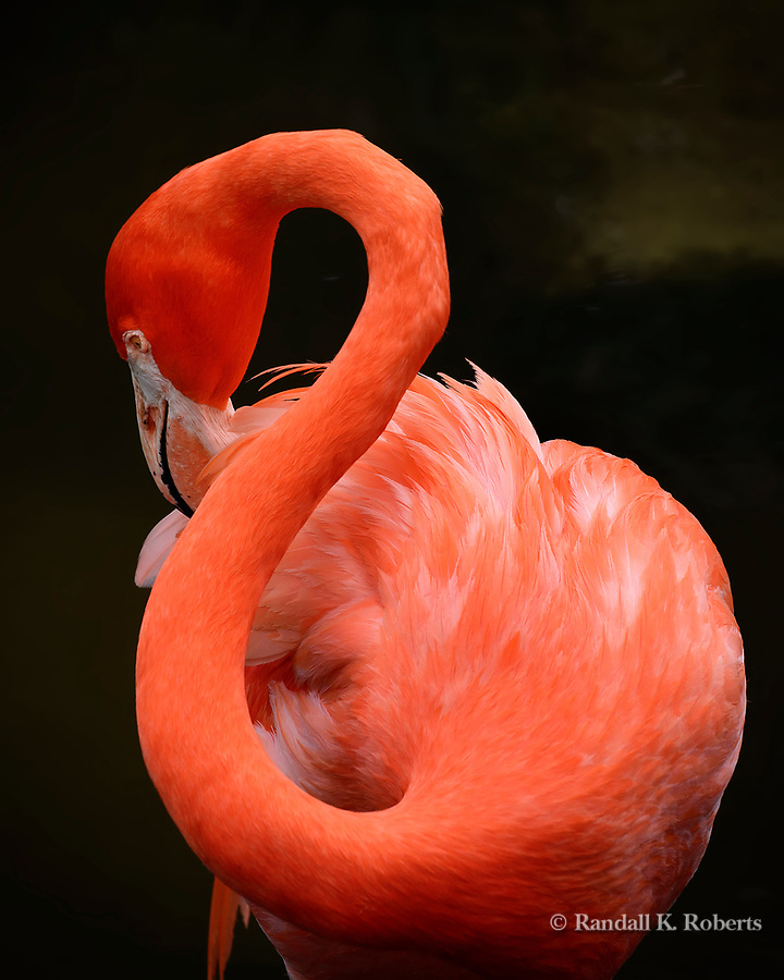 Flamingo,  Osceola County, Florida