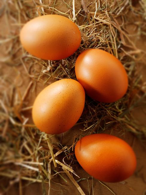 Fresh Burford Brown free range organic Eggs