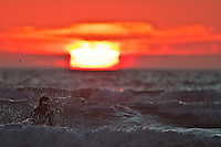 Surfer, sunset, Morro Bay, San Luis Obispo county, California