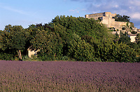 Lavender field with Grignan Castle visible on the hill top, Provence, France.