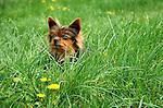 Guinivere in spring grass