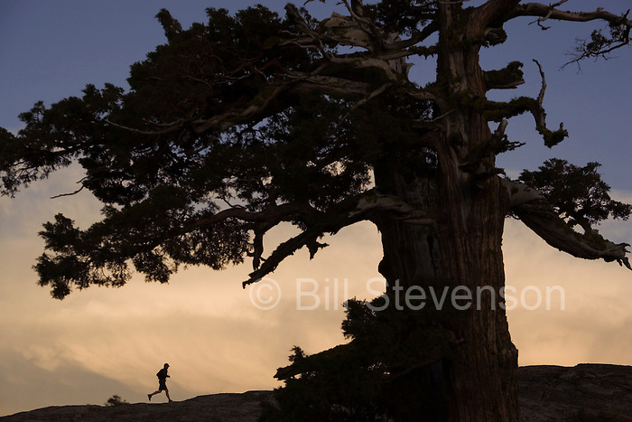 A picture of a silhouette of a runner and tree at sunset on Donner Summit in California