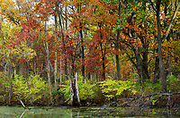 Fall color comes out along the shores of Mark's Pond at Greene Valley Forest Preserve in DuPage County, Illinois
