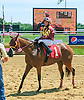 Lulu Island winning at Delaware Park on 8/15/15