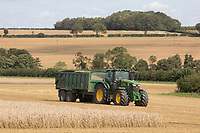 Carting wheat<br /> ©Tim Scrivener Photographer 07850 303986<br />      ....Covering Agriculture In The UK....