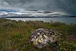Lichen Covered Rock by Yellowstone Lake