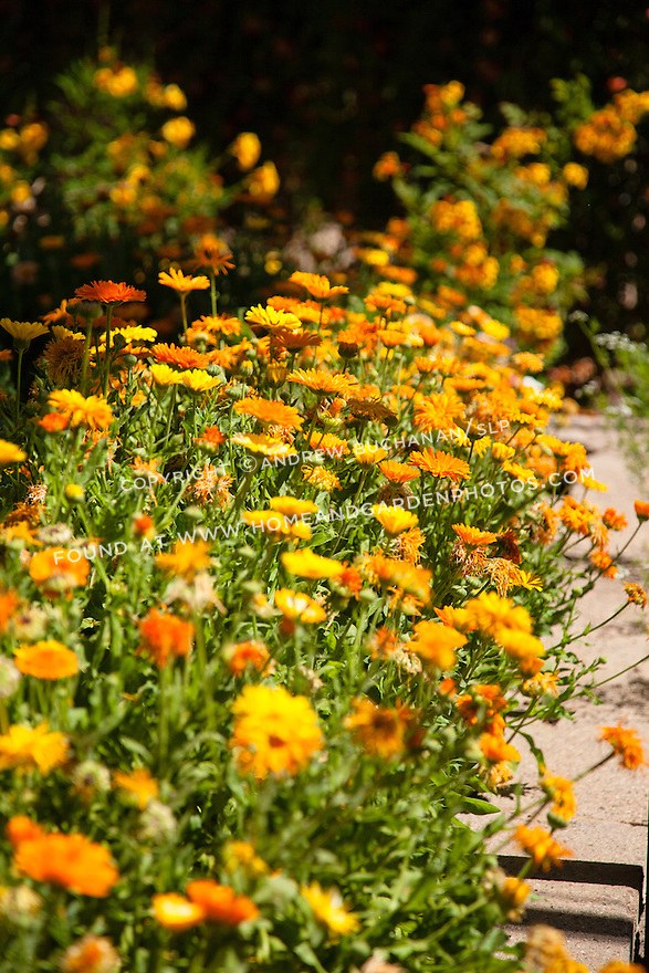 Bright orange blooms create a colorful border at the Desert Botanical Garden in Phoenix.