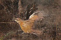 Detail of a bird, from the lower black fresco frieze in the Fourth Style of Roman wall painting, 60-79 AD, in the large room adjoining the service room in the Fullonica di Stefanus, or Fullonica of Stephanus, a laundry in Pompeii, Italy. Pompeii is a Roman town which was destroyed and buried under 4-6 m of volcanic ash in the eruption of Mount Vesuvius in 79 AD. Buildings and artefacts were preserved in the ash and have been excavated and restored. Pompeii is listed as a UNESCO World Heritage Site. Picture by Manuel Cohen