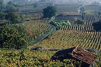 """Europe/France/Auverne/63/Puy-de-Dôme/Chateaugay: Le vignoble """"Côtes d'Auvergne"""""""