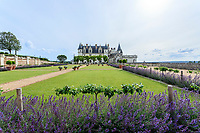France, Indre-et-Loire (37), Amboise, château d'Amboise, la cour d'honneur et bordure de népétas, pommiers menés en cordon