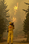 August 21, 2001 Coulterville, California  -- Creek Fire – San Francisco Channel 2 news photographer videotapes fire jumping Cuneo Road. The Creek Fire burned 11,500 acres between Highway 49 and Priest-Coulterville Road a few miles north of Coulterville, California.