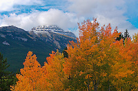 Warm autumn color in the rockies