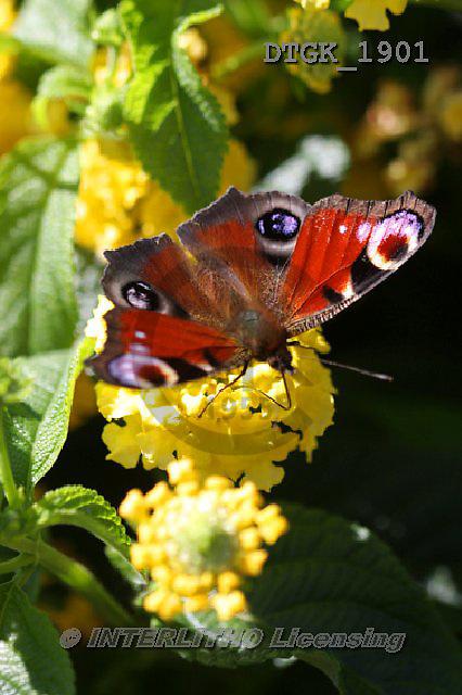 Gisela, FLOWERS, BLUMEN, FLORES, photos+++++,DTGK1901,#f#