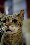 Tabby cat portrait, head shot, NYC