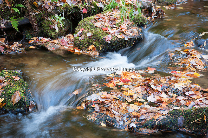 Quiet Forest Stream in Autumn