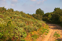 Chateau Mire l'Etang. La Clape. Languedoc. Garrigue undergrowth vegetation with bushes and herbs. France. Europe.