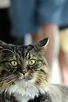 Cats Expressive
