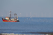 Fishing Boat with following gulls, with Sheringham shoal wind turbines in background,  Norfolk UK