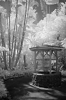wishing well, Hawaii Tropical Botanical Garden, Hilo, Hawaii, Big Island of Hawaii