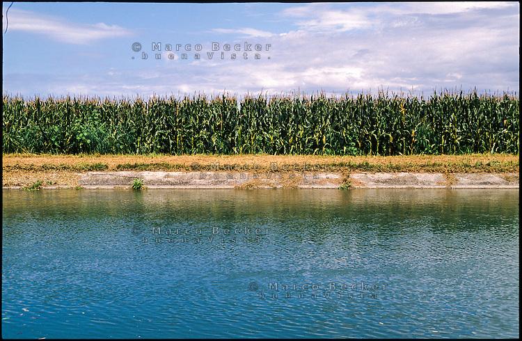 Bellinzago Lombardo (Milano). Piantagione di granoturco lungo il Naviglio Martesana --- Bellinzago Lombardo (Milan). Cornfield along the Naviglio Martesana canal