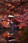 Bentendo Hall and a bridge reflecting in a pond at Daigo-ji temple. Beautiful colorful fall scenery with Japanese maples around. Shimo-Daigo part of Daigoji complex in bright red autumn colors. Shingon Buddhist temple in Fushimi-ku, Kyoto, Japan 2017.