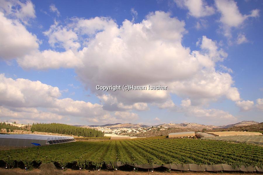 Israel, Shephelah, a view of the vineyard from Moshav Shekef