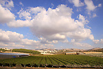 Israel, Shephelah, a view of the vineyard from Moshav Shekef