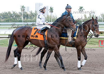 Sunshine Millions Day at Gulfstream Park 1-28-12