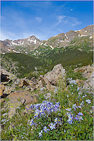Columbine, Colorado's state flower, adorn the side of Mount Massive in the summer months, making this hike a beautiful morning adventure.
