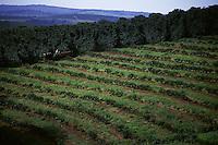 Carmo da Cachueira_MG, Brasil...Vista panoramica de uma plantacao de cafe de uma fazenda...The panoramic view of coffee plant at a farm...Foto: LEO DRUMOND / NITRO