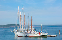 Bar Harbor Maine harbor with whale watching tourist boats on water with ocean and sails masts