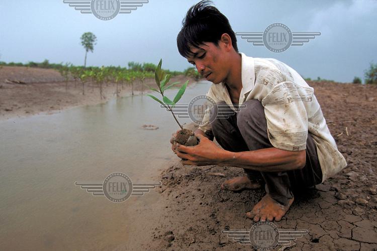 Farmer with mangrove seedling.