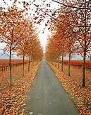USA, California, the road to Beaulieu Vineyard in autumn season, Rutherford