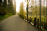 Idaho,Coeur d'Alene. A winding single lane road with sun burning through the morning fog, with fence in spring.