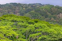 Rain Forest, Tortuguero, Costa Rica, Central America