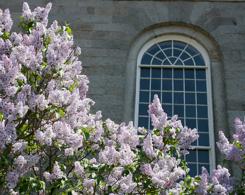 Lilacs, South Church, Portsmouth