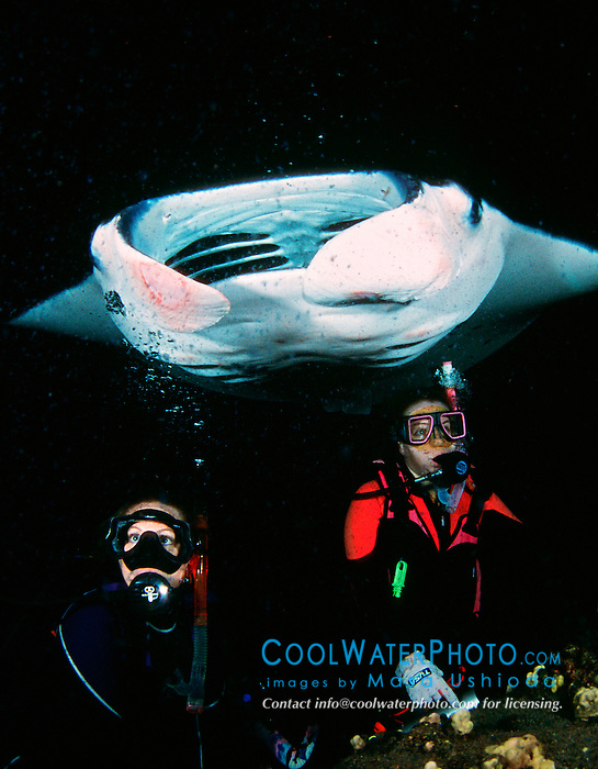 woman scuba divers and reef manta ray or coastal manta, Manta alfredi, feeding at night, Kona Coast, Big Island, Hawaii, Pacific Ocean, MR - model released