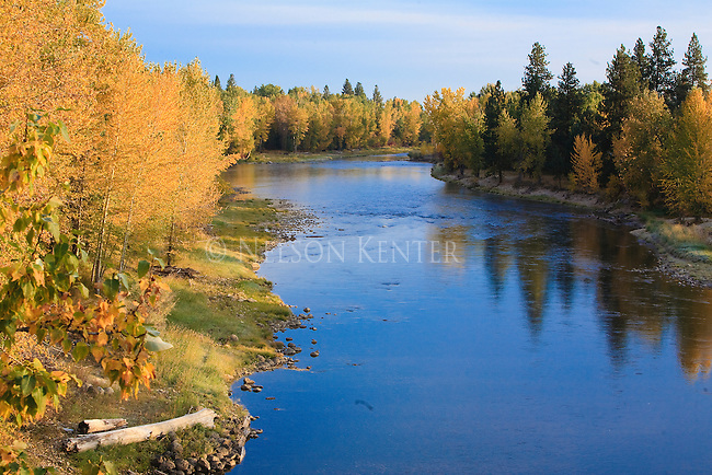 Autumn colors along the shore of the Bitterroot River above Hamilton, Montana