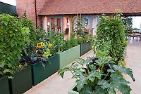Raised bed vegetable garden with corn, herbs, squash, sunflowers, grapes fruit, leeks and upscale house