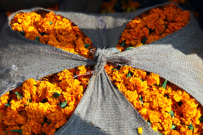 A sack full of marigolds sits on the street in the heart of Chandni Chowk, the main street  in India's Old Delhi. Used in religious offerings marigolds sell by the sackful on a daily basis in the teeming metropolis.