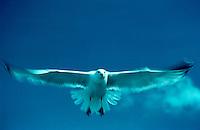 Seagulls gliding through a beautiful blue sky.