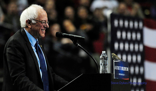 Democratic presidential candidate Bernie Sanders smiles as a bird lands on his podium as he addresses the crowd during a rally at the Moda Center in Portland, Ore., Friday, March 25 , 2016. (AP Photo/Steve Dykes)