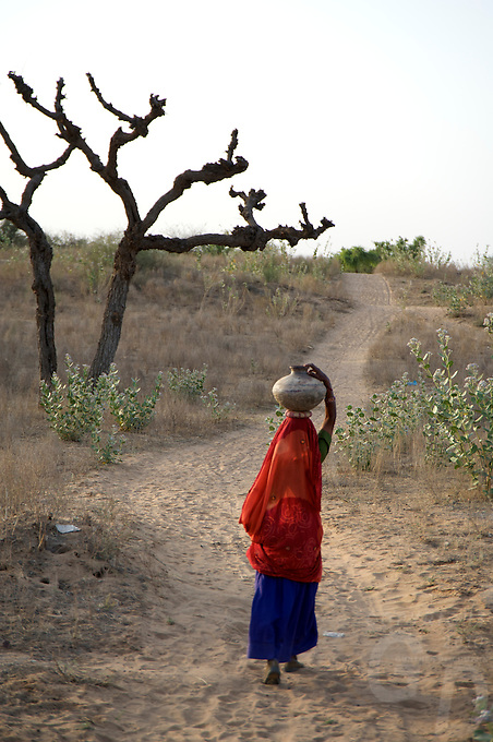 On the road from Bikaner to Mandava, Rajasthan India,