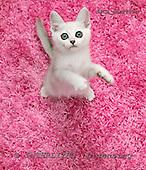Xavier, ANIMALS, cats, photos+++++,SPCHCATS740C,#a# Katzen, gatos