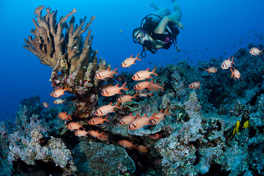 Diver (MR) and a school of shoulderbar soldierfish, Myripristis kuntee.   Hawaii.